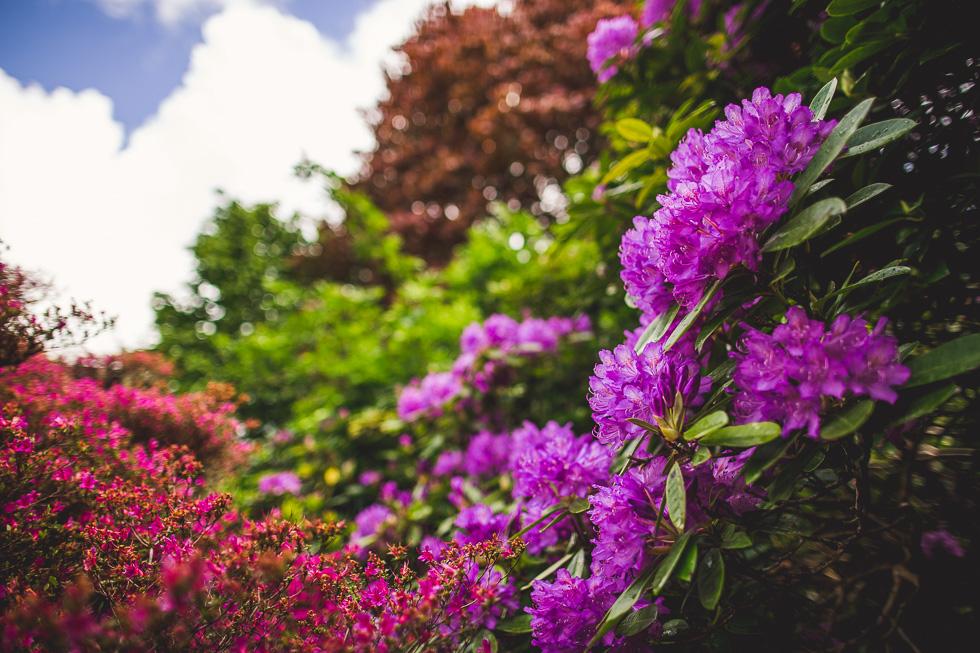 40-andy-carrie-ireland-killarney-muckross-house-garden-andyandcarriephoto